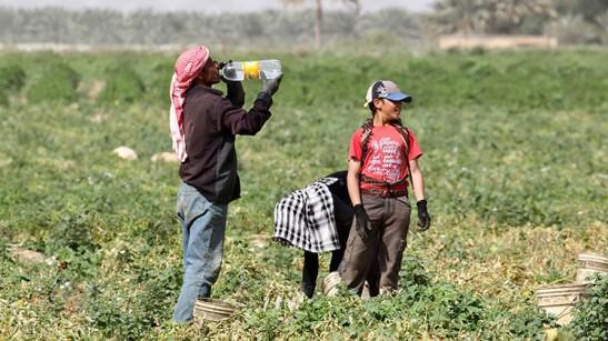 1732. Israel explota brutalmente a centenares de niños palestinos en asentamientos agrícolas