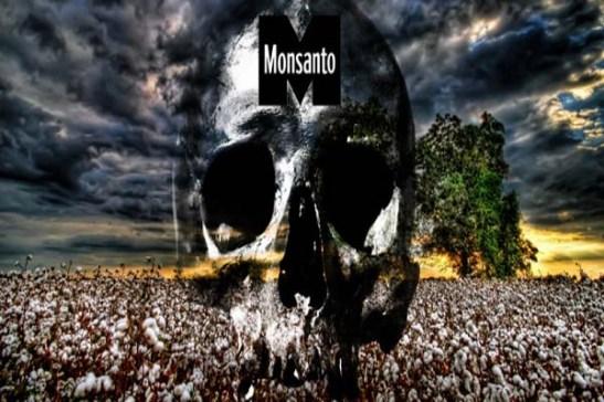 1797. India - Monsanto puede estar detrás de miles de suicidios de agricultores de algodón