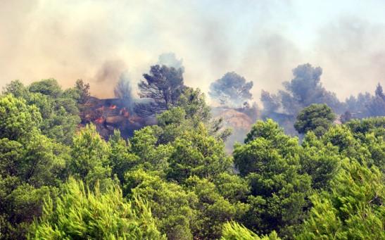 1866. Aprobada la Ley de Montes que permite construir en terreno incendiado