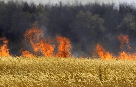 2027. Hungría quema todos los cultivos transgénicos de Monsanto