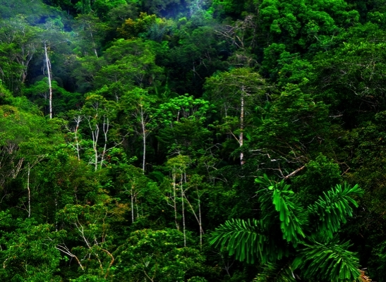 3015. Ecuador Set To Sell One Third Of Pristine Rainforest To Chinese Oil Companies